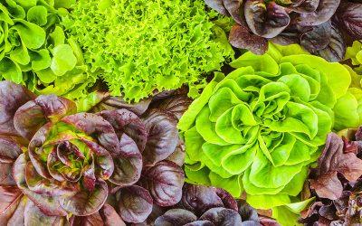 Hydroponic Vegetable Gardening Indoors